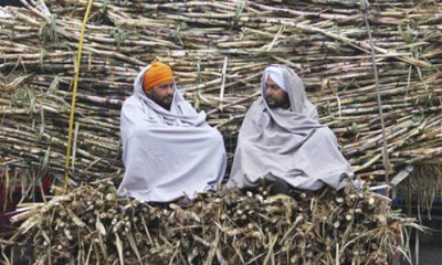 Sugarcane growers