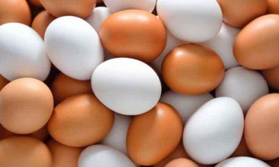 Brown-Eggs-vs-White-Eggs