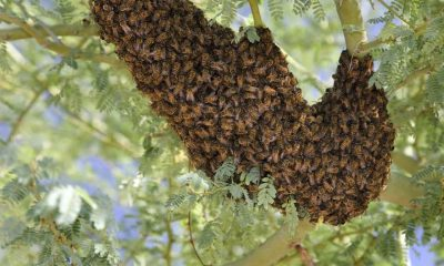 honey bees on a tree