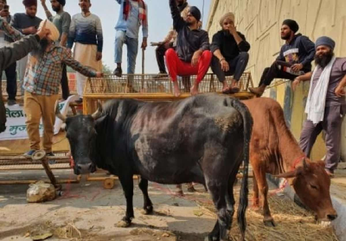 Farmers Protest Animal